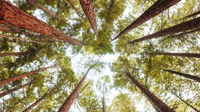 21 novembre – Giornata nazionale degli alberi